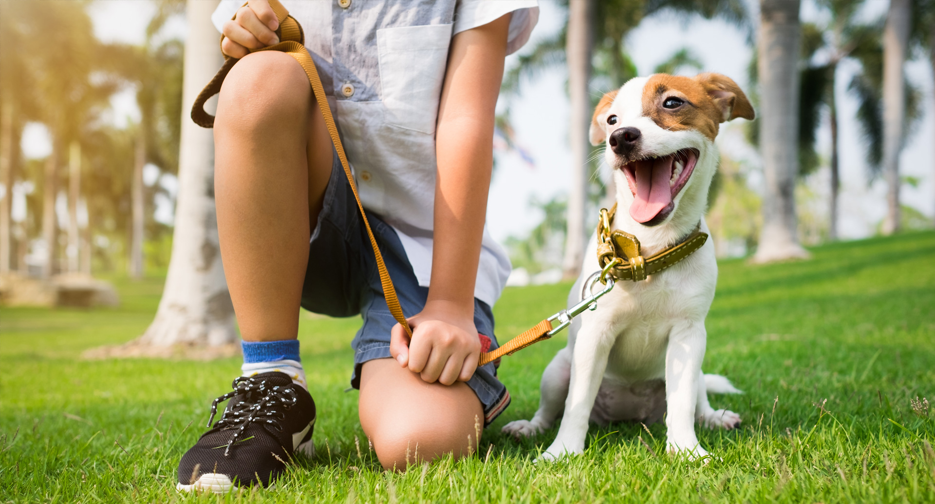 Excited Puppy on leash